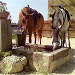 http://www.gite-equestre-lepalefroi.fr/