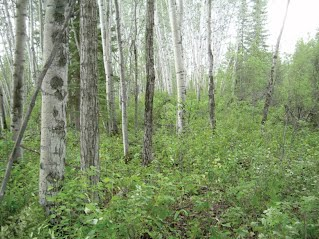 sun river dating site The tanana river valley region in interior alaska has one of the longest archaeological records in north america dating  sites including upward sun river .