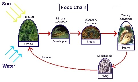 Grizzly Bear Food Chain Diagram House Wiring Diagram Symbols