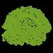 cabbage image