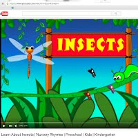 Insects picture