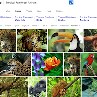 http://www.bing.com/images/search?q=Tropical+Rainforest+Animals&FORM=RESTAB