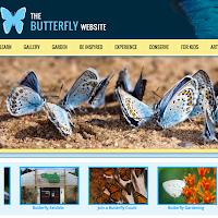 butterfly website .com