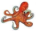 Octopus - English