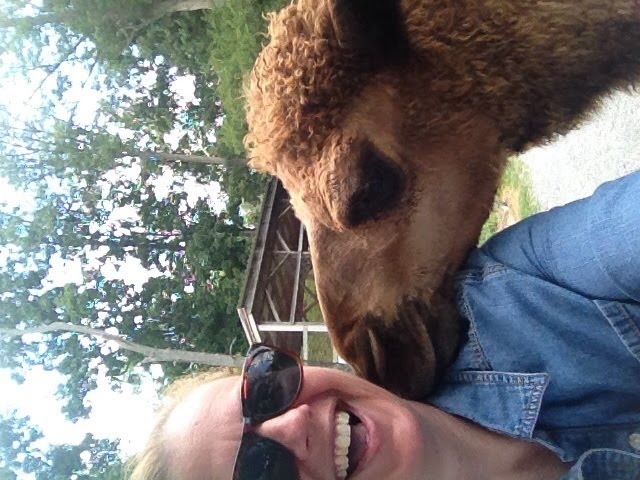 Is it still a selfie if there's a camel in it?