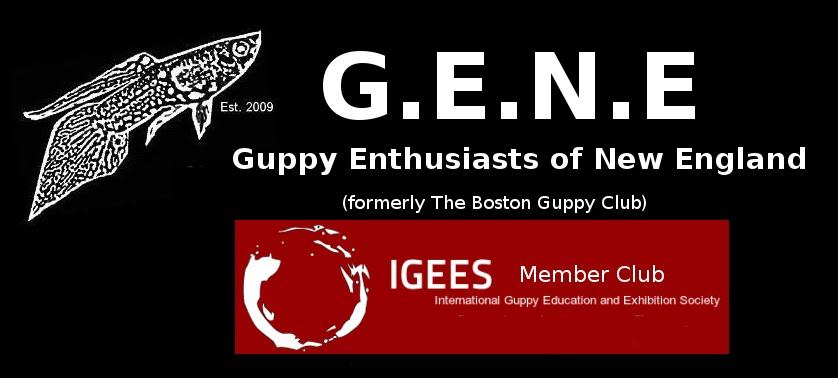 Guppy Enthusiasts of New England