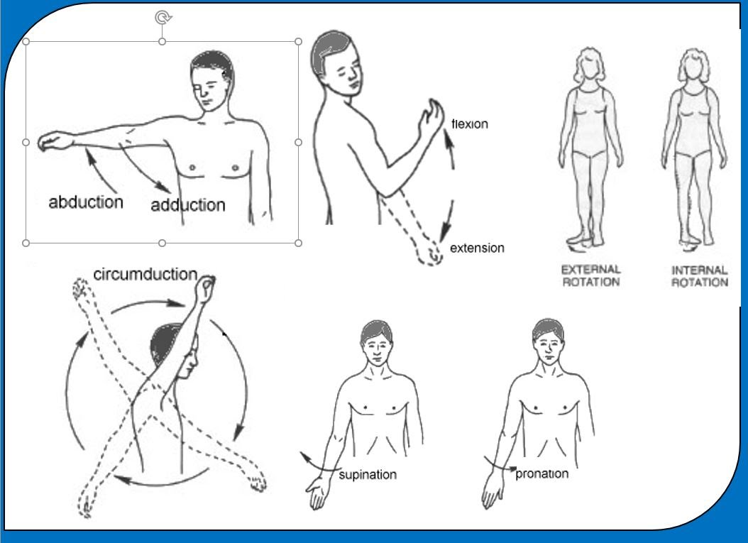 Anatomy - 7th HE - Mr.Becker SMS
