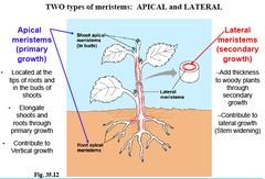 9.1 Plant structure & growth - SL/HL2 Biology Ferguson  9.1 Plant struc...