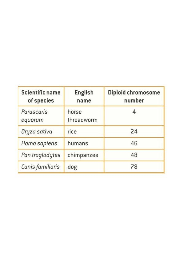 Worksheets Number Of Chromosomes Worksheet 3 2 chromosomes slhl 1 biology 5 ferguson the examples of genome and chromosome number have been selected to allow points interest be raised