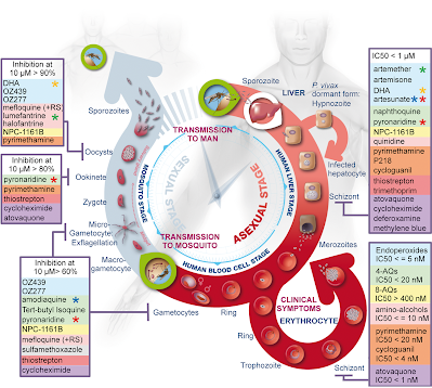 prioritising drug targets for antimalarial drugs Unfortunately, resistance to the drugs targeting these pathways has already been  reported,  to prioritize screening of active compounds and to identify new  targets  in malaria, unique drug targets are often identified after a small- molecule.
