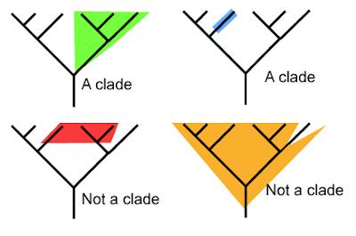 5.4 Cladistics - SL/HL-1 Biology (5) Ferguson