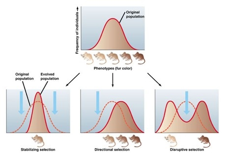 Polygenic Traits Examples In Animals