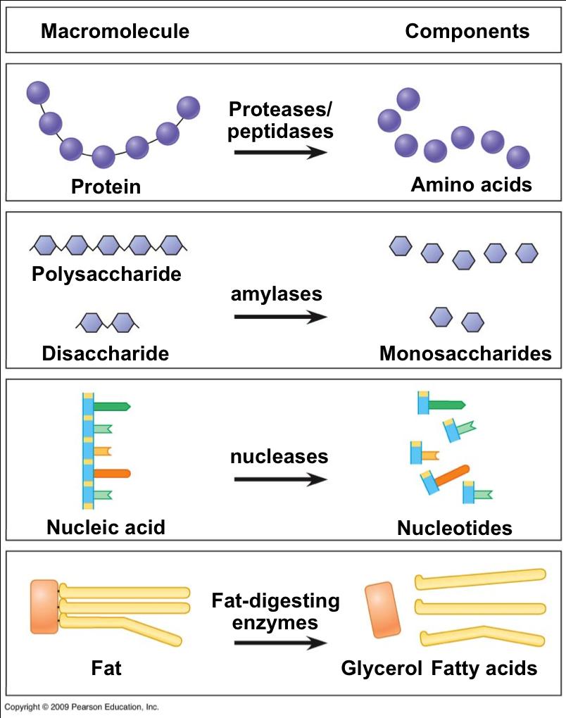 testing macromolecules