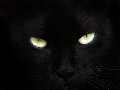 Cat Eye Sensitive To Light