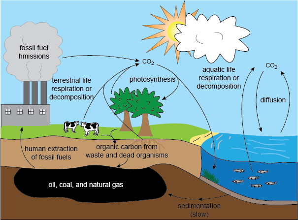 Carbon Cycle - Earth's Changing Climate: Causes, Effects & Solutions