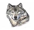 https://sites.google.com/a/cfisd.net/angela-bowen/home/Wolf.PNG