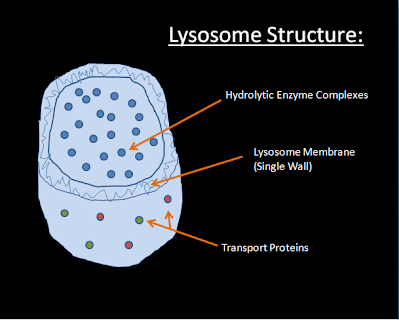 lysosomes emac cell site pointer
