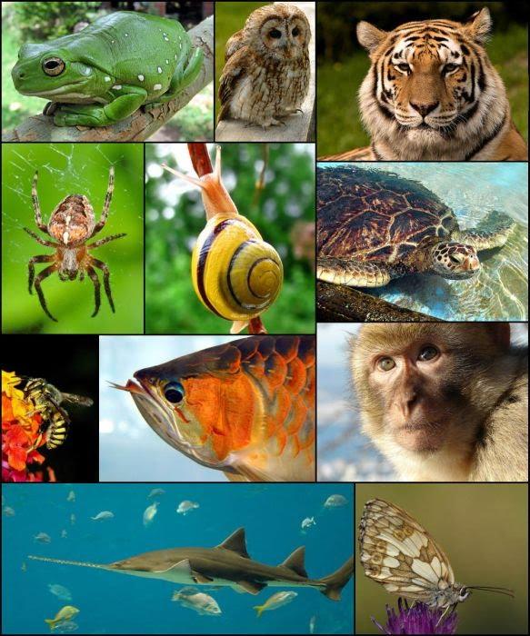 Characteristics Current Research Google Sites Kingdom Animalia Six Kingdoms