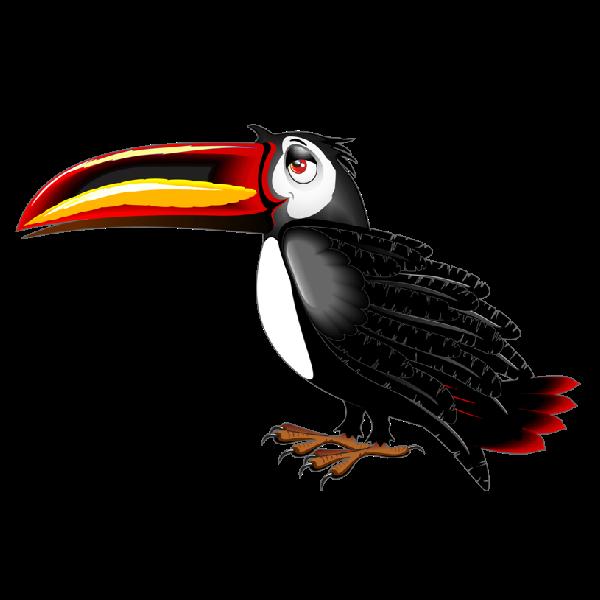 bird images toucan clipart color page toucan clipart color page