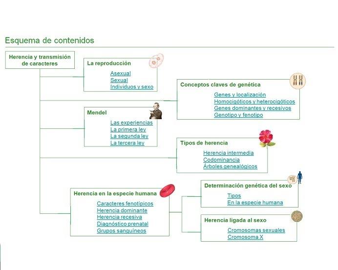 Tema 3 Herencia Y Transmisión De Caracteres Biología Y Geología 4º Eso