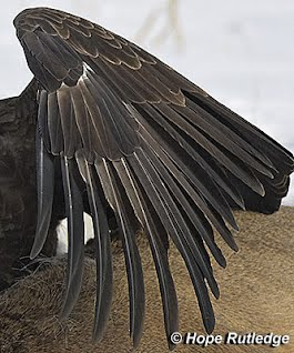 how do birds feathers help them the many patterns of feathers