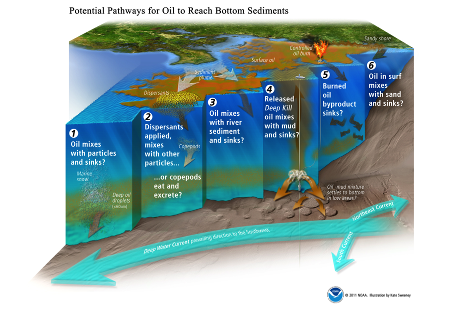report into strategy and social responsibility of british petroleum Executive summary this report discusses the issue of concern because an oil spill is considered to be a disaster for both for human beings and the environment  now the organization needs.