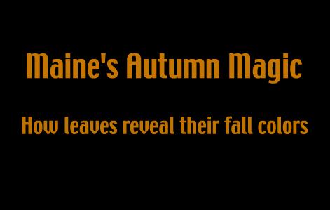 http://www.maine.gov/dacf/mfs/projects/fall_foliage/kids/movie.html
