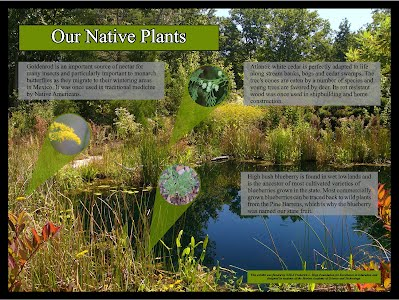 Our Native Plants.jpg?height= ...