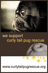 Curly Tail Pug Rescue