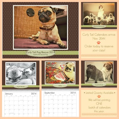 Curly Tail Pug Rescue Calendar 2014