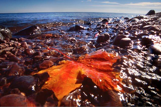 Orange leaf on the beach of Lake Superior