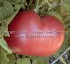https://www.victoryseeds.com/tomato_new-big-dwarf.html