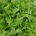 https://www.seedsavers.org/baby-oakleaf-lettuce