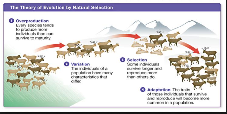 Main Principles Of Natural Selection