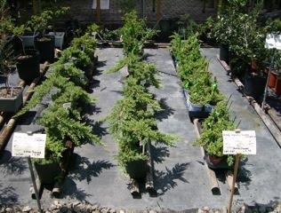 My bonsai plants-for-sale!