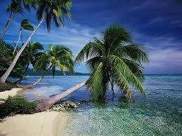 tropical words exotic and tropical vocabulary adoption