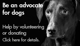 Be an advocate for dogs.  Help by volunteering or donating.  Click here for details.