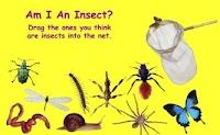https://sites.google.com/a/freeholdtwp.k12.nj.us/errickson-media-center/science-review/insect.jpg