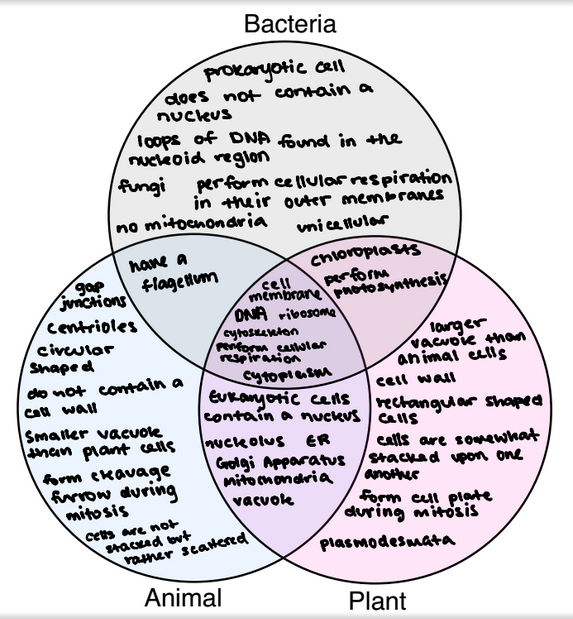Venn Diagram 5 Jamwal Cell Website
