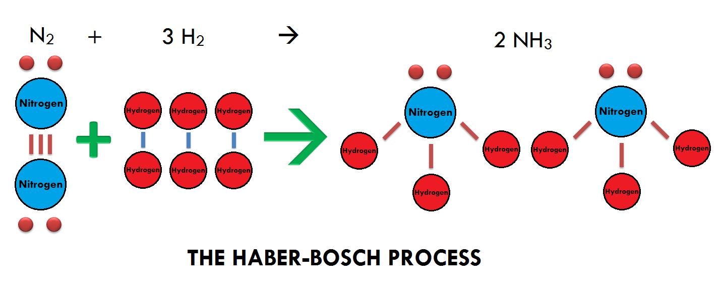 Industrial Nitrogen Fixation - Nitrogen Cycle