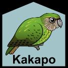Kakapo Term 1
