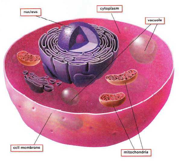 animal cell labeled 5th grade - DriverLayer Search Engine