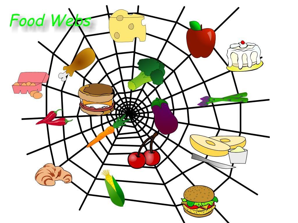 Food Webs - The Universe of Food