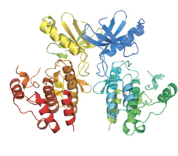 crystal structure of a protein kinase dimer