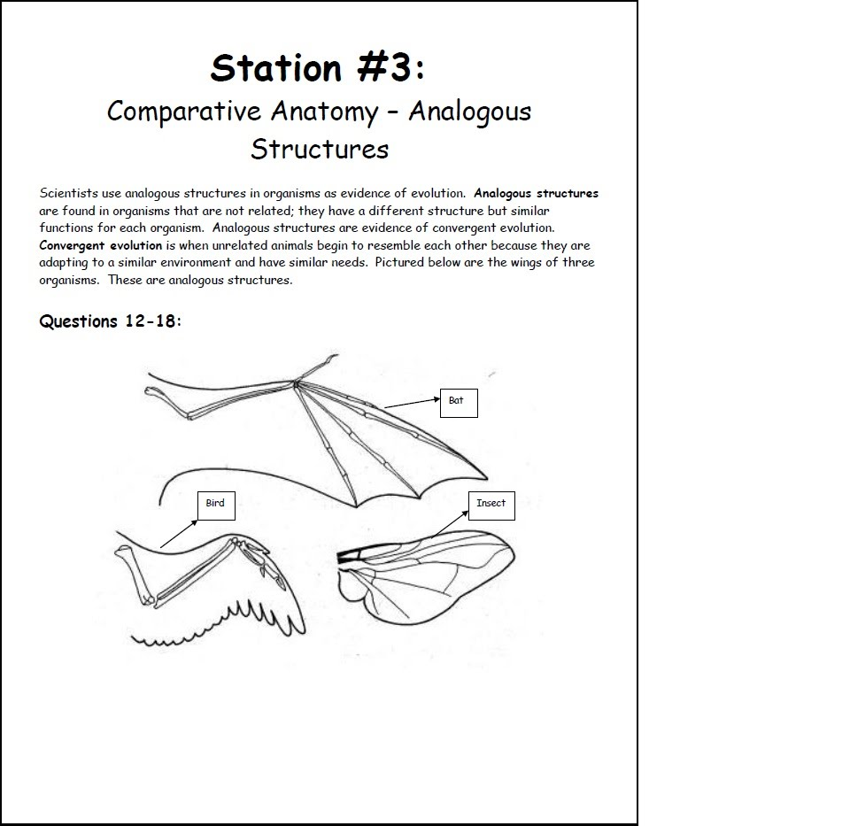 Station 3 Comparative Anatomy Analagous Structures Biology