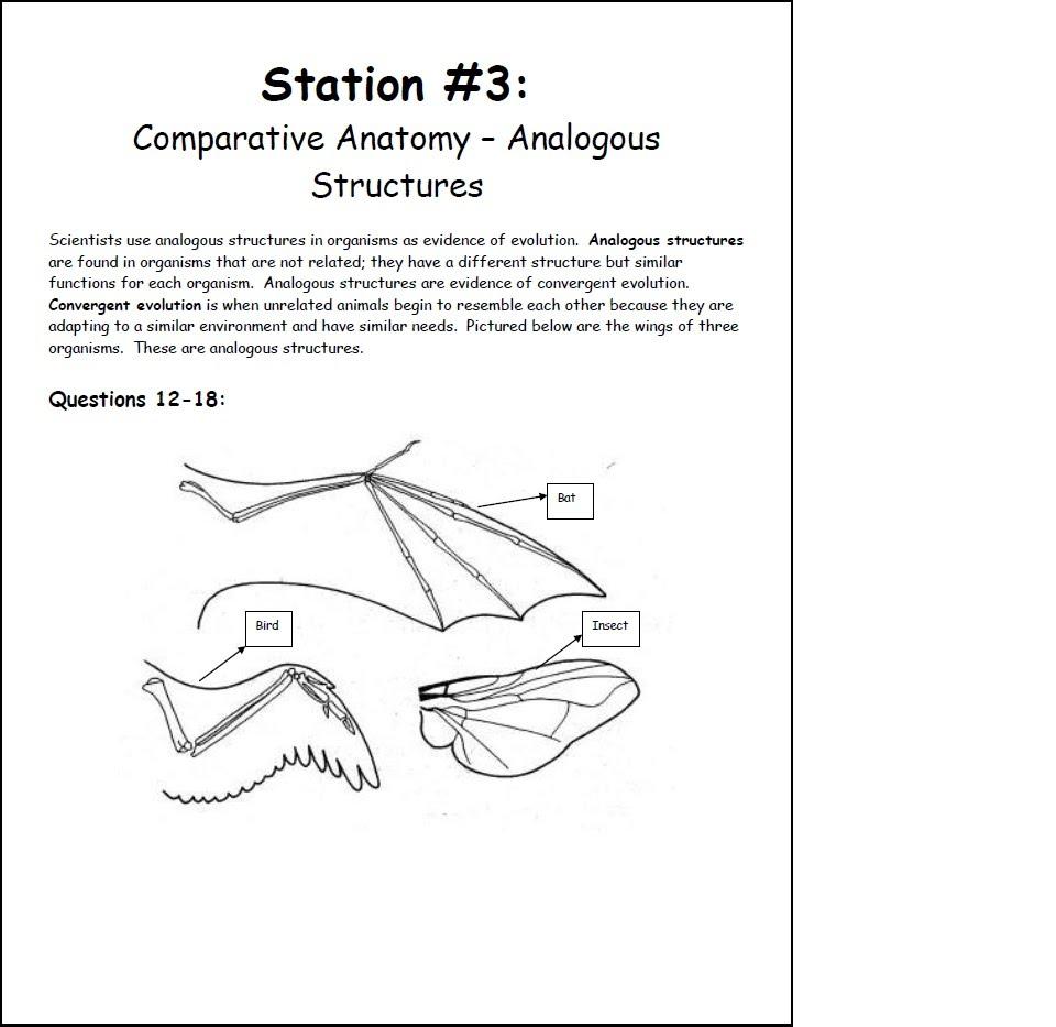 Comparative anatomy biology