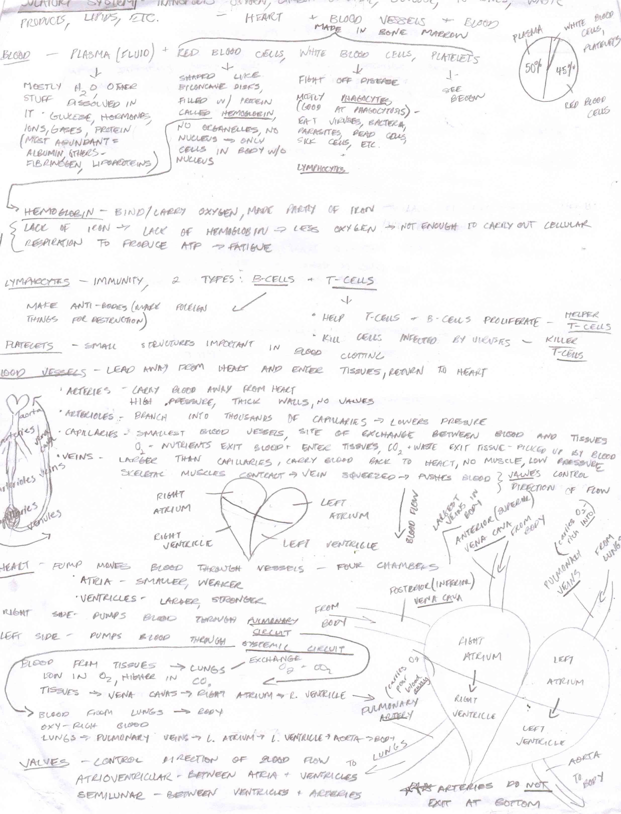 Biology SAT Cheat Sheets - Jeanette G's Digital Portfolio