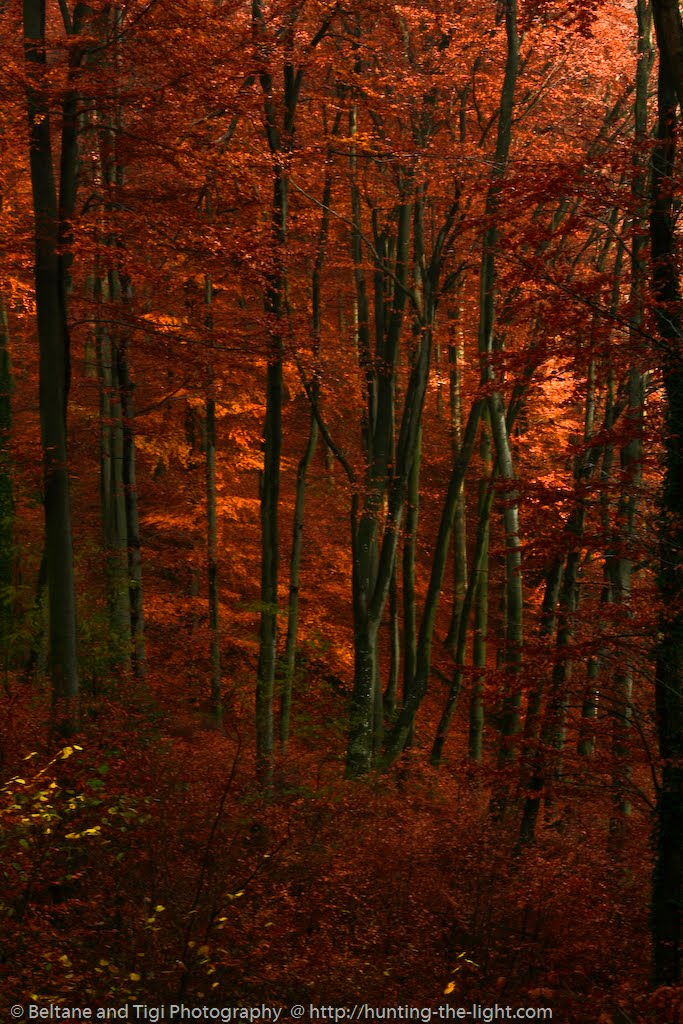 Beltane and TIgi: Red Forest