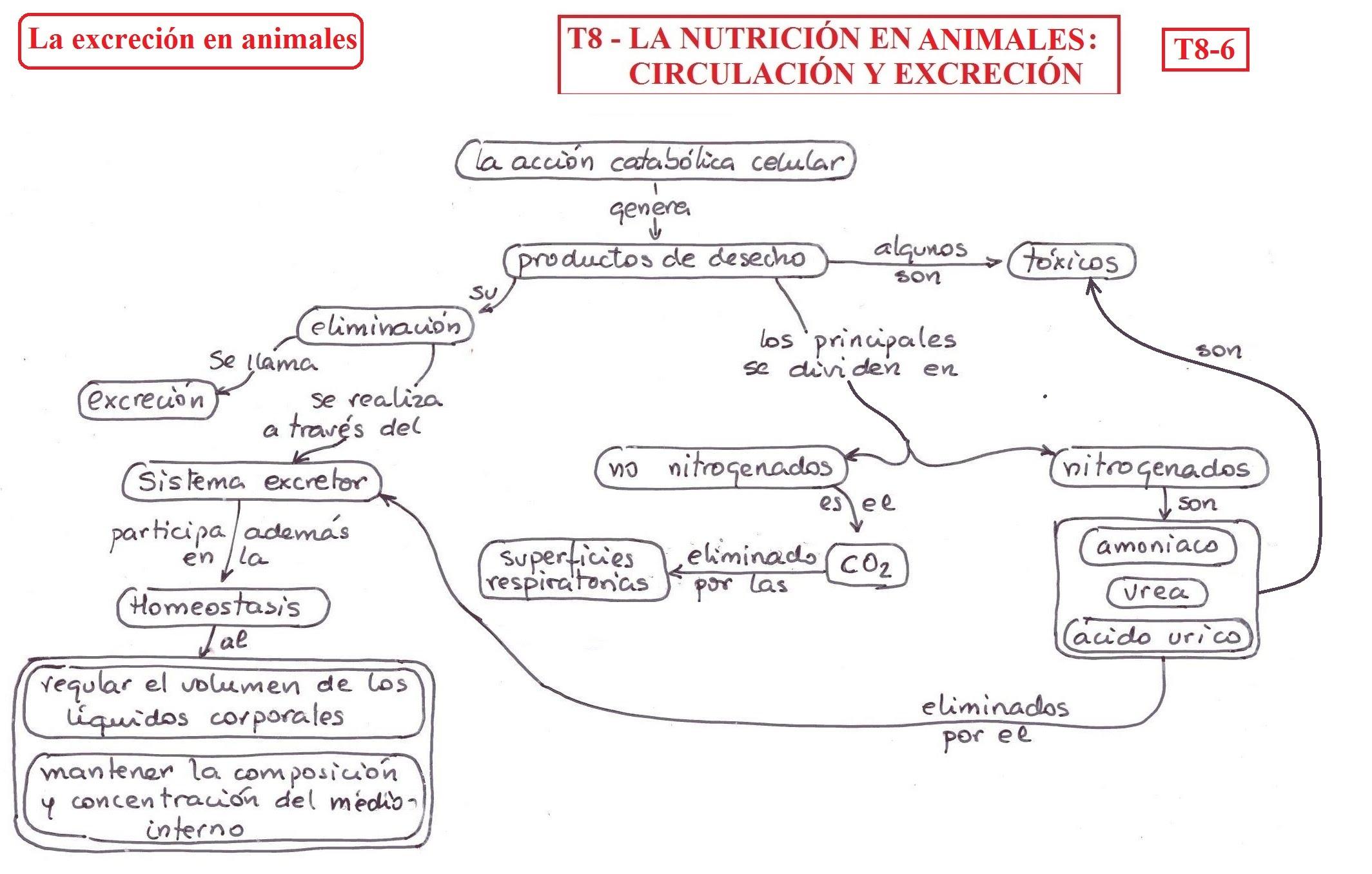 T08- La nutrición en animales II: circulación y excreción..