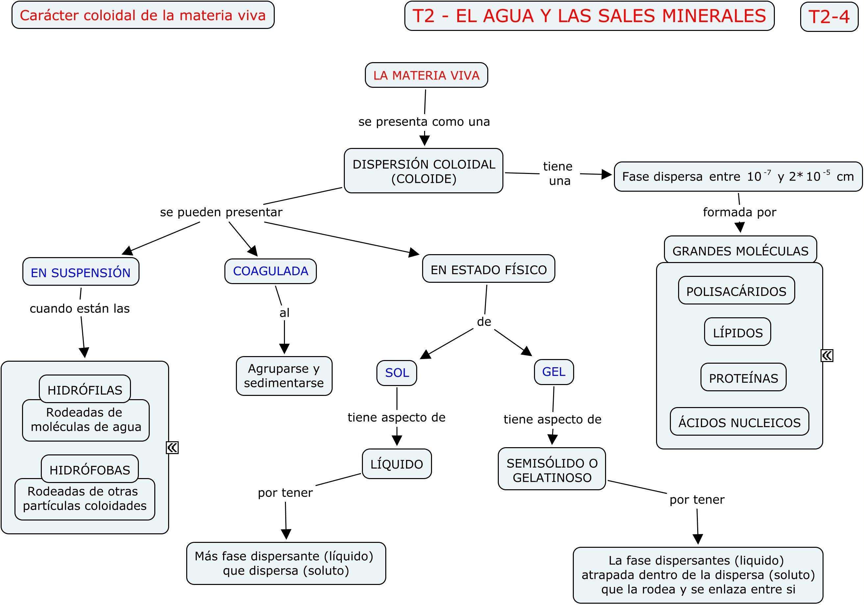 Tema 02 El Agua Y Las Sales Minerales Porfolio De